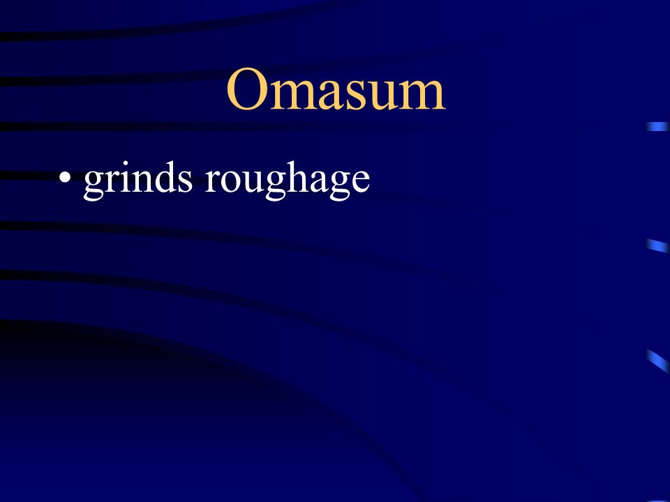 Omasum grinds roughage