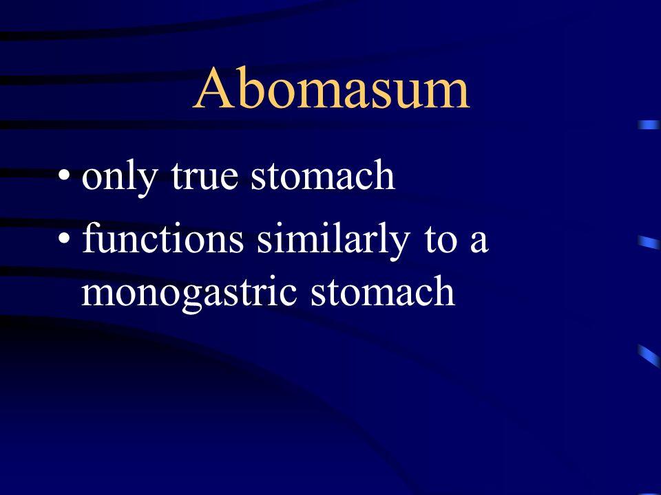 Abomasum only true stomach