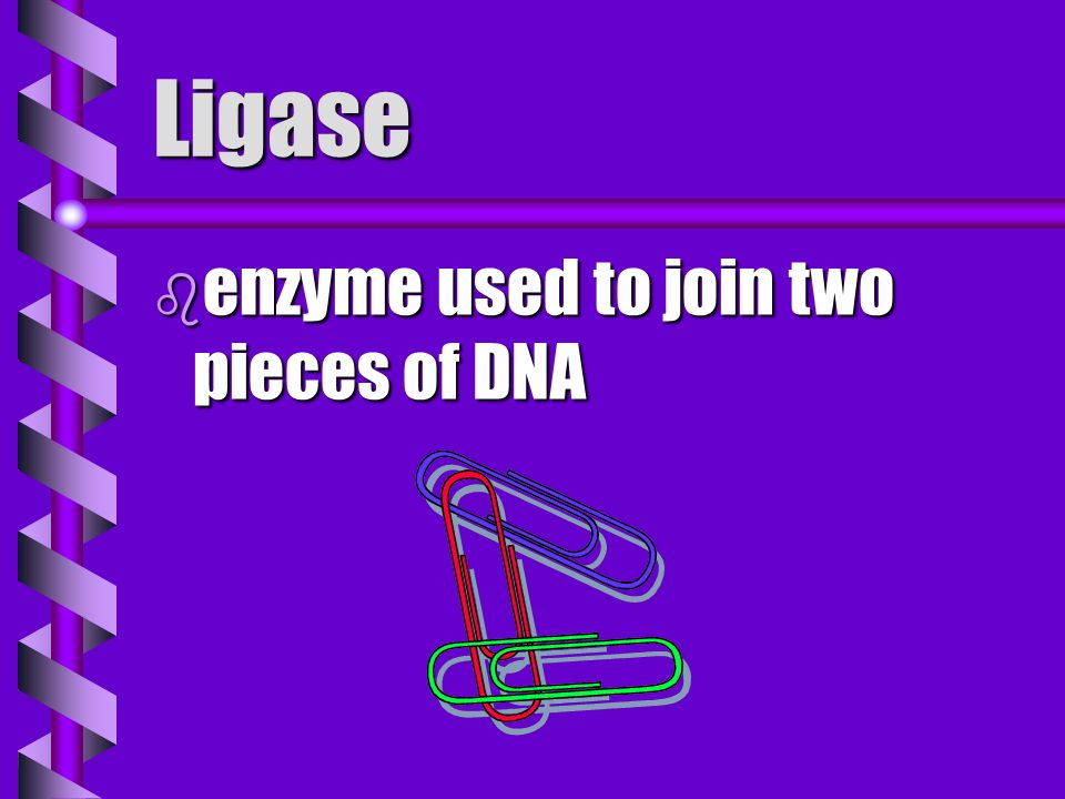 Ligase enzyme used to join two pieces of DNA