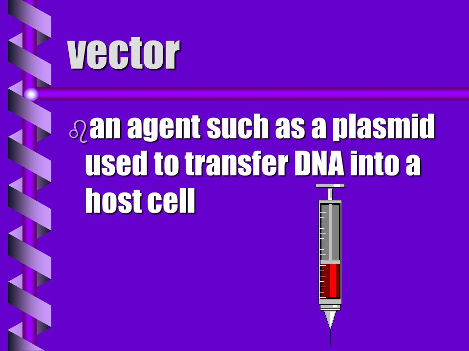 vector an agent such as a plasmid used to transfer DNA into a host cell