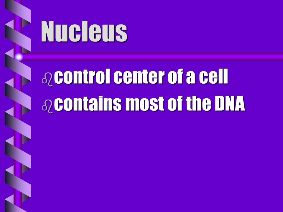 Nucleus control center of a cell contains most of the DNA