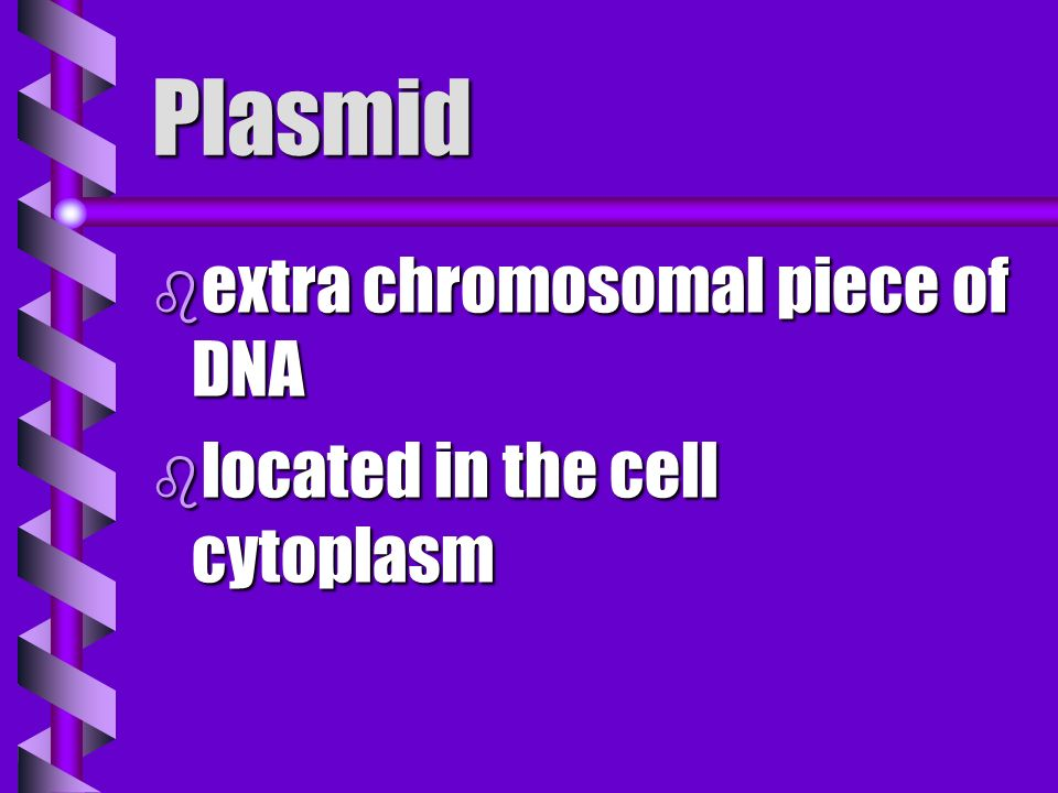 Plasmid extra chromosomal piece of DNA located in the cell cytoplasm