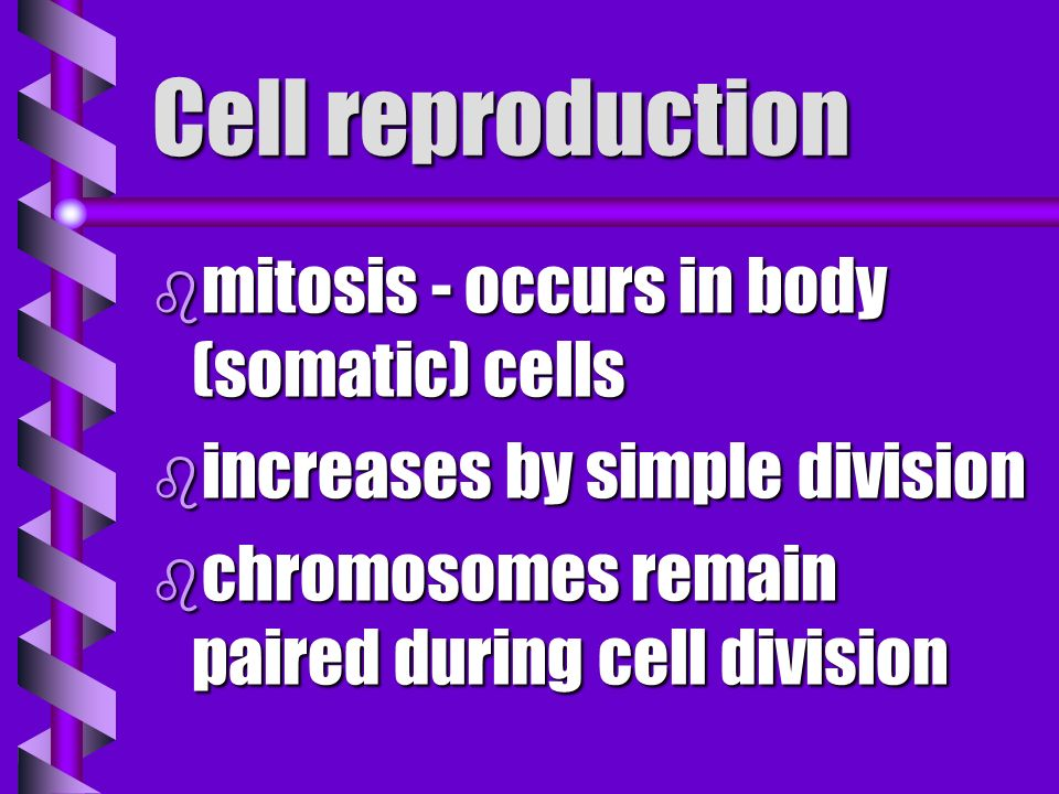 Cell reproduction mitosis - occurs in body (somatic) cells