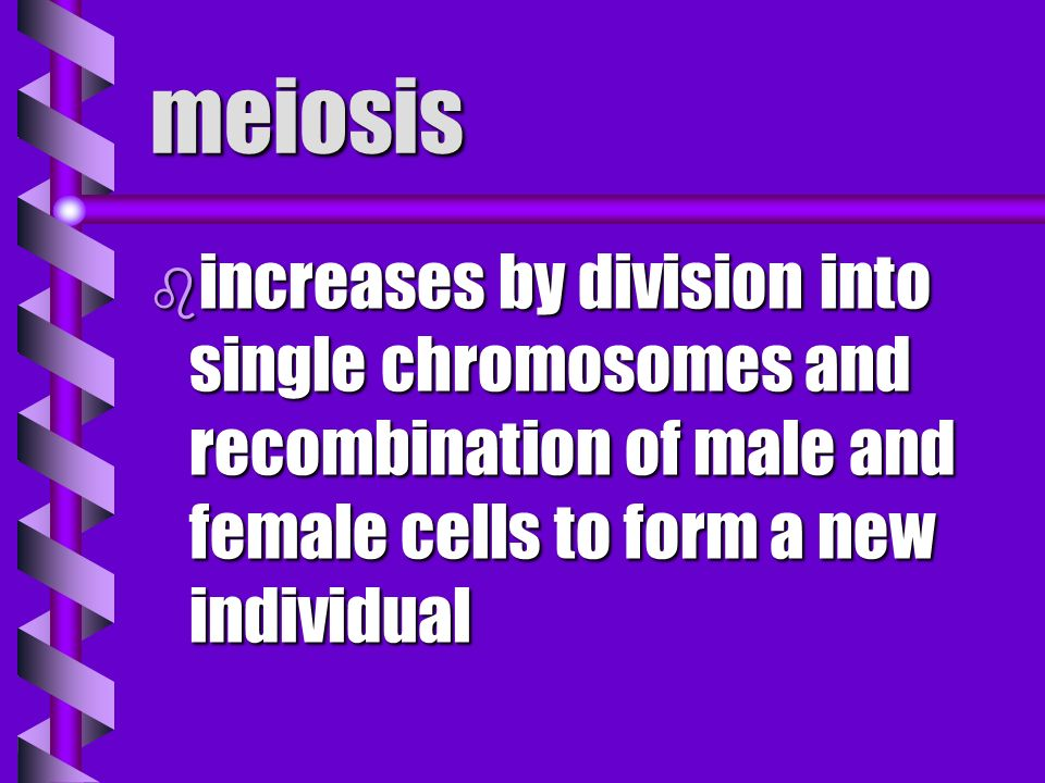 meiosis increases by division into single chromosomes and recombination of male and female cells to form a new individual.