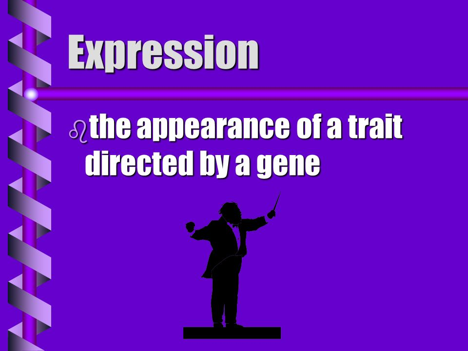 Expression the appearance of a trait directed by a gene