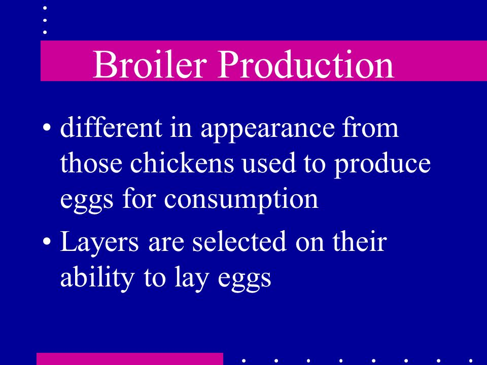 Broiler Production different in appearance from those chickens used to produce eggs for consumption.