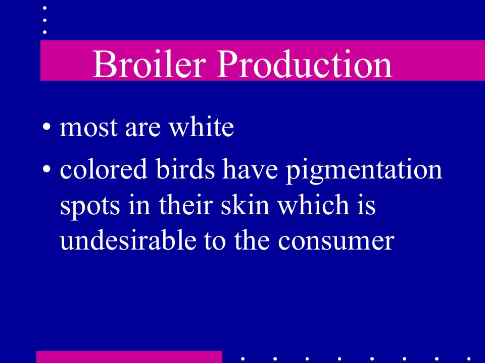 Broiler Production most are white