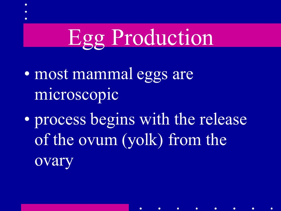 Egg Production most mammal eggs are microscopic