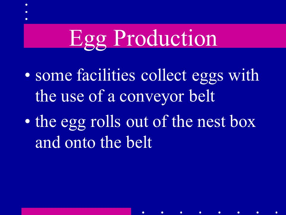 Egg Production some facilities collect eggs with the use of a conveyor belt.