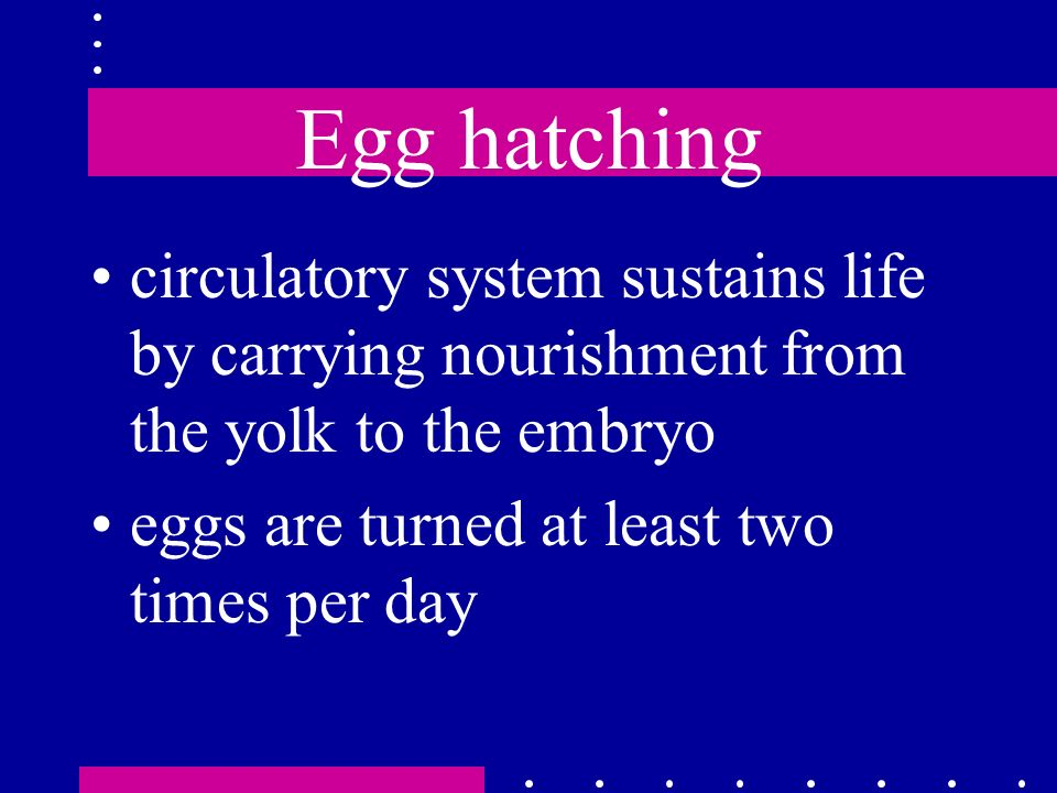Egg hatching circulatory system sustains life by carrying nourishment from the yolk to the embryo.