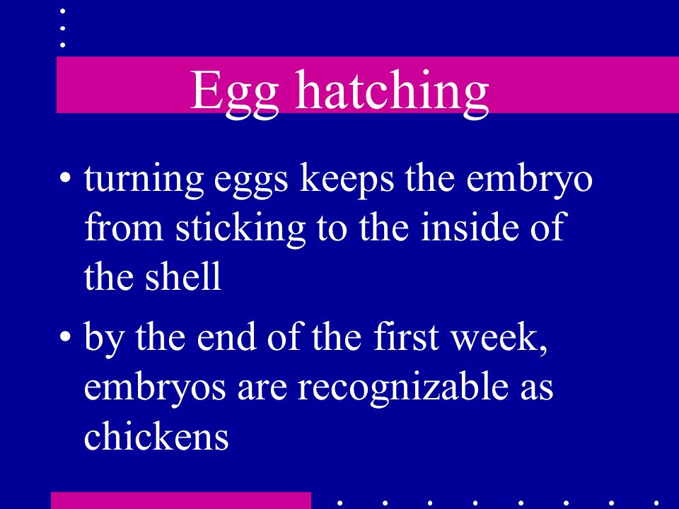 Egg hatching turning eggs keeps the embryo from sticking to the inside of the shell.