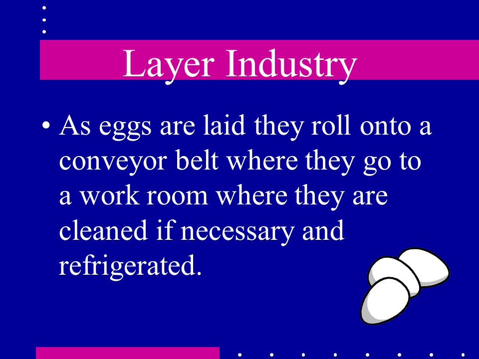 Layer Industry As eggs are laid they roll onto a conveyor belt where they go to a work room where they are cleaned if necessary and refrigerated.