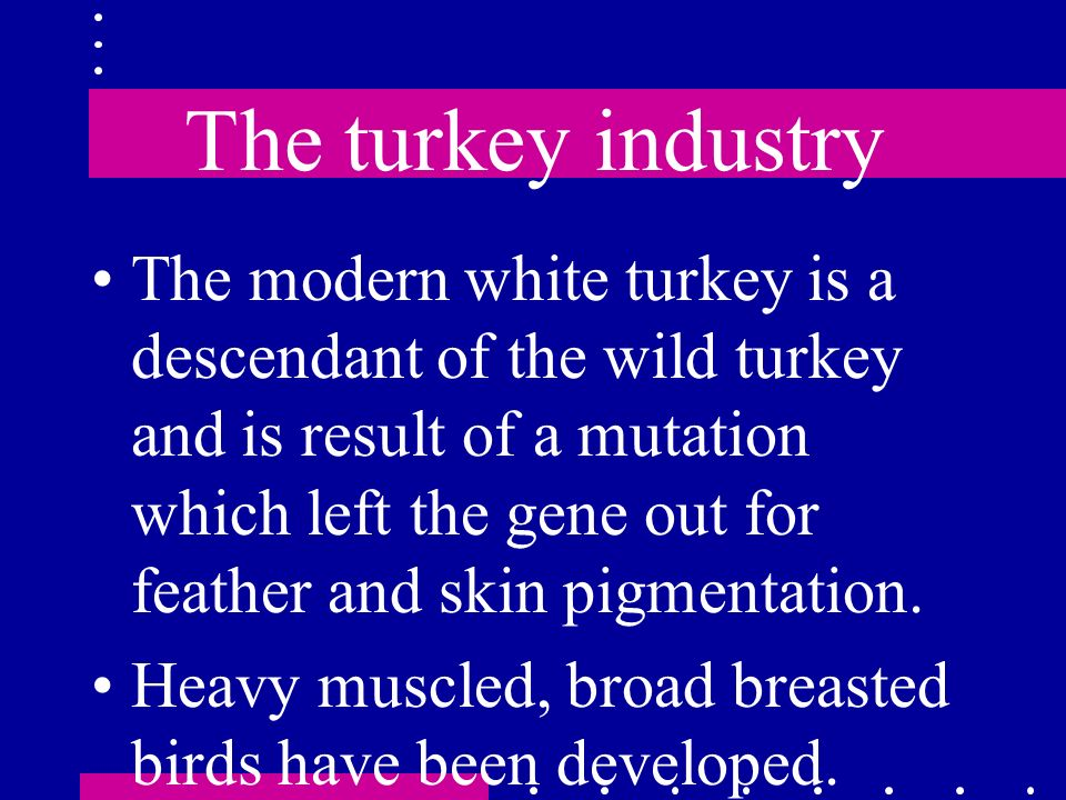 The turkey industry