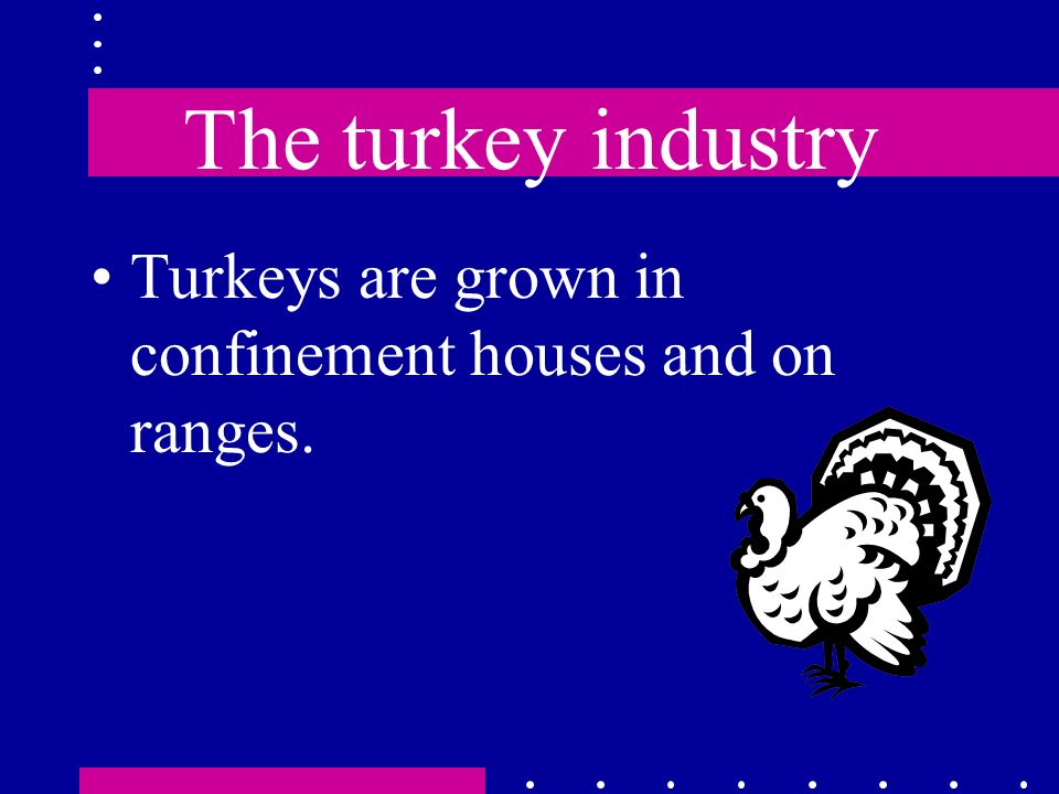 The turkey industry Turkeys are grown in confinement houses and on ranges.