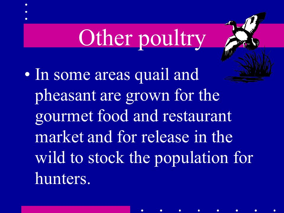 Other poultry
