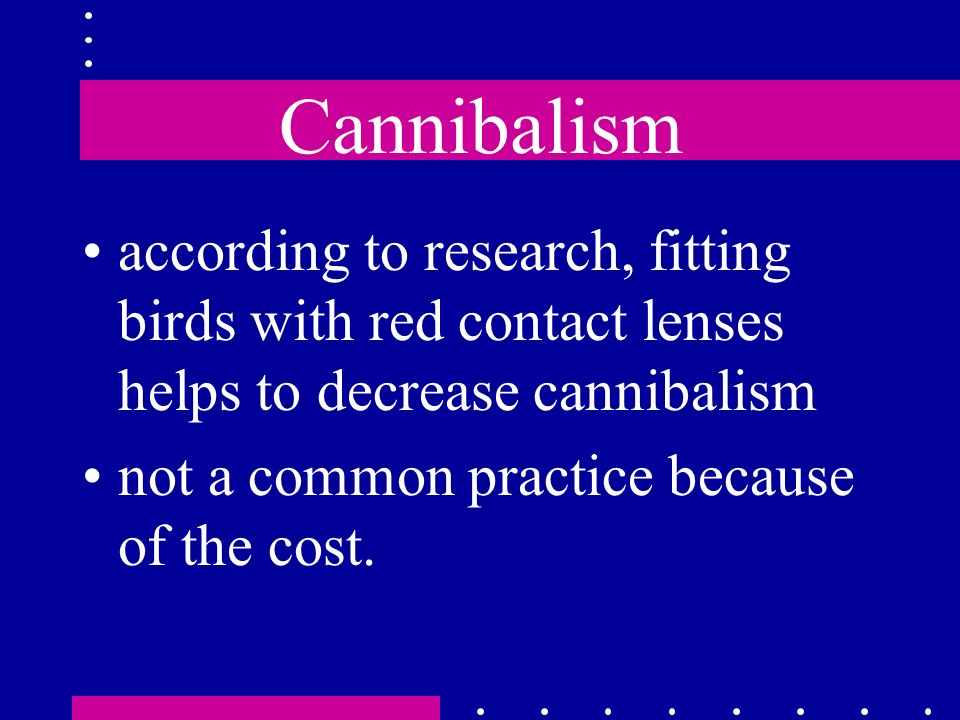 Cannibalism according to research, fitting birds with red contact lenses helps to decrease cannibalism.