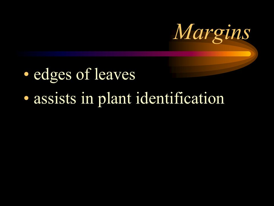 Margins edges of leaves assists in plant identification