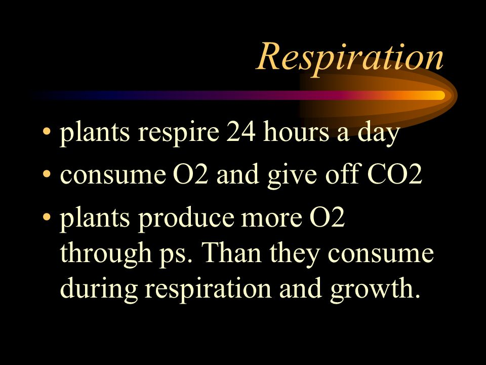 Respiration plants respire 24 hours a day consume O2 and give off CO2