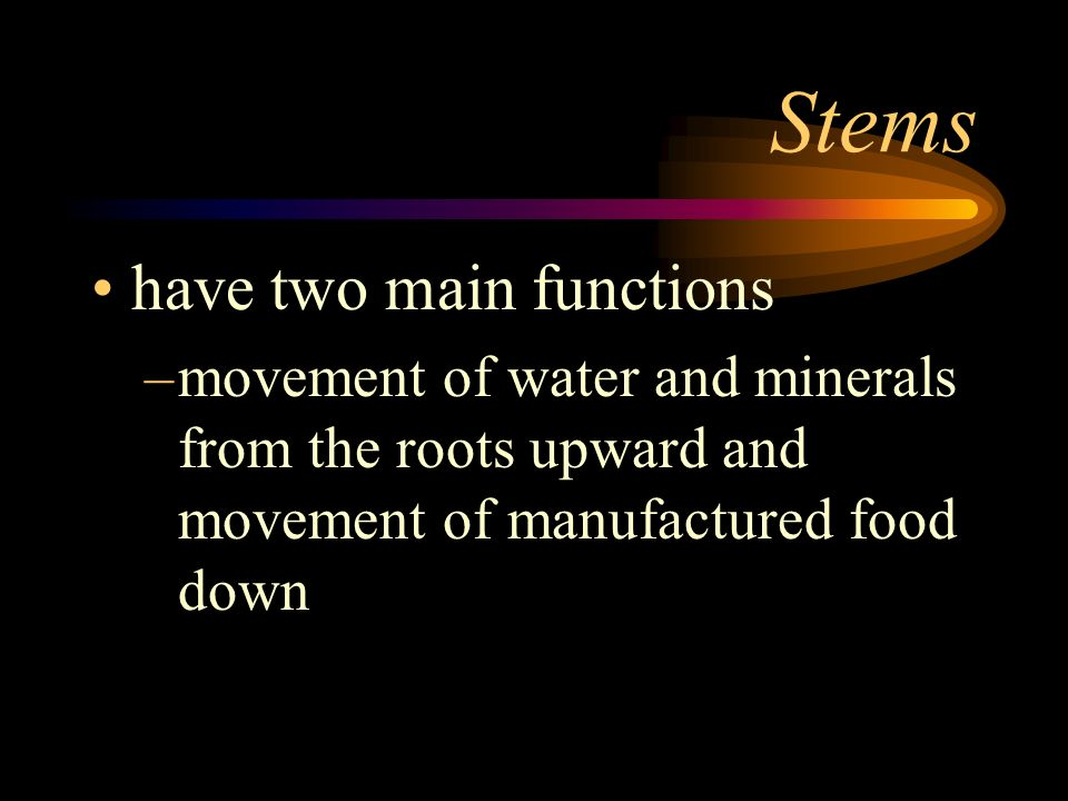 Stems have two main functions
