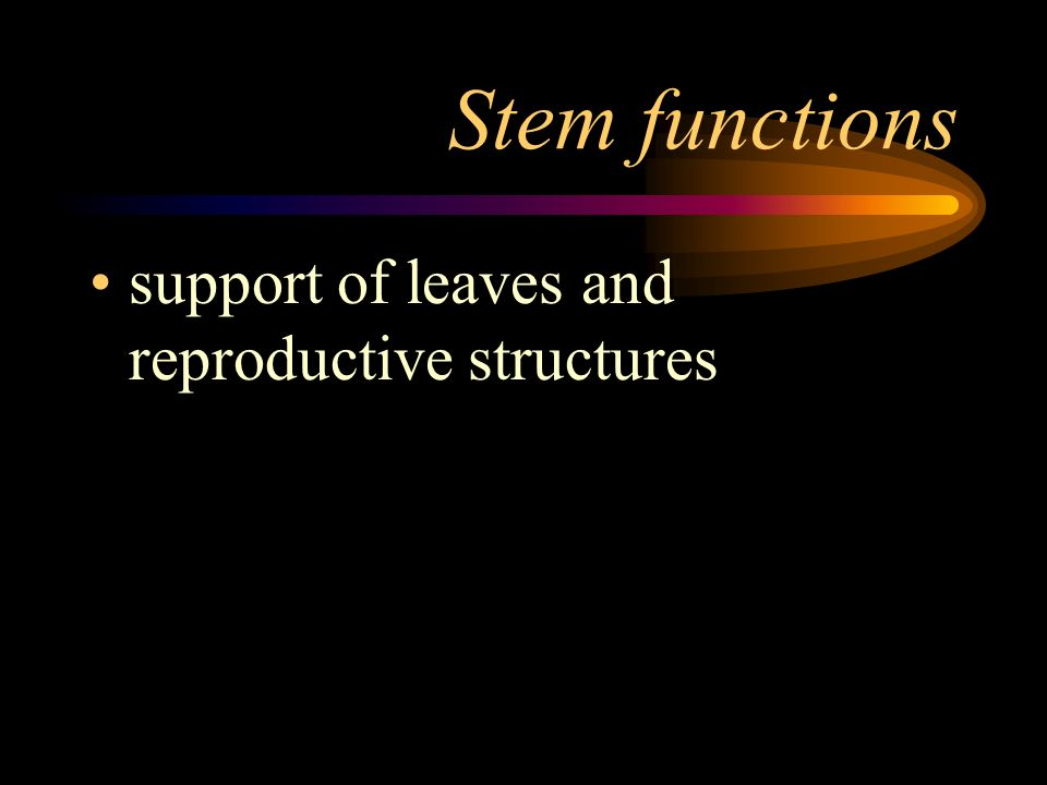 Stem functions support of leaves and reproductive structures