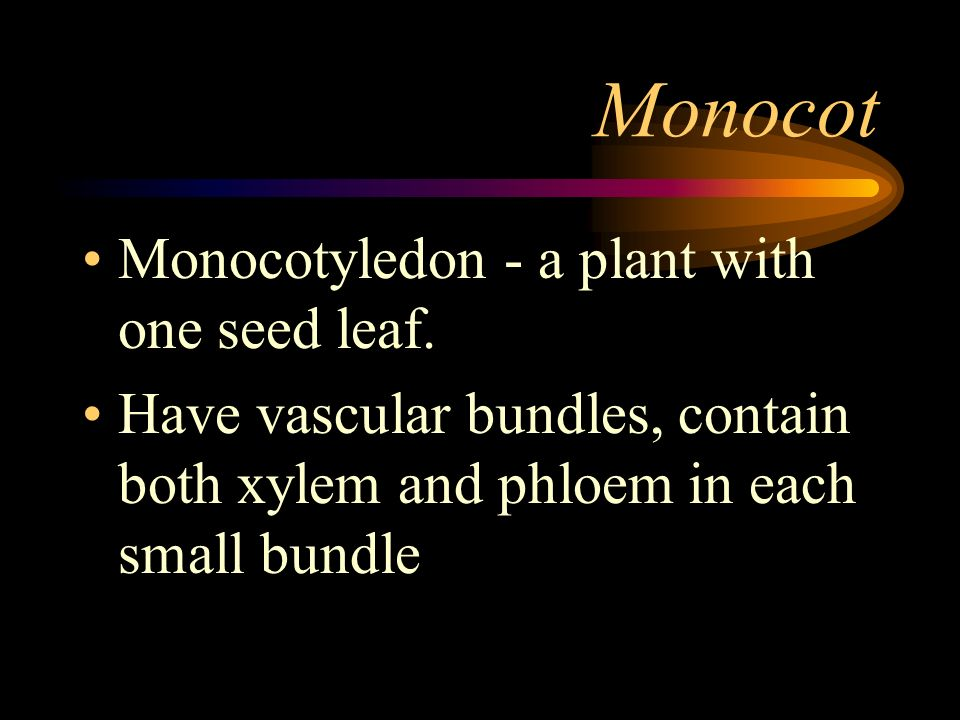 Monocot Monocotyledon - a plant with one seed leaf.