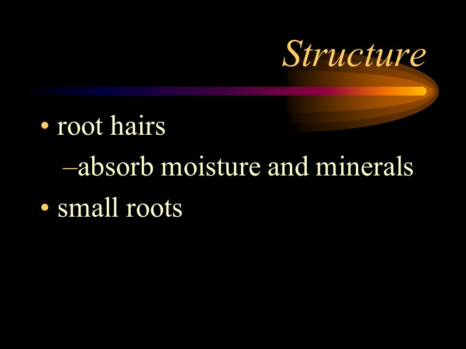 Structure root hairs absorb moisture and minerals small roots