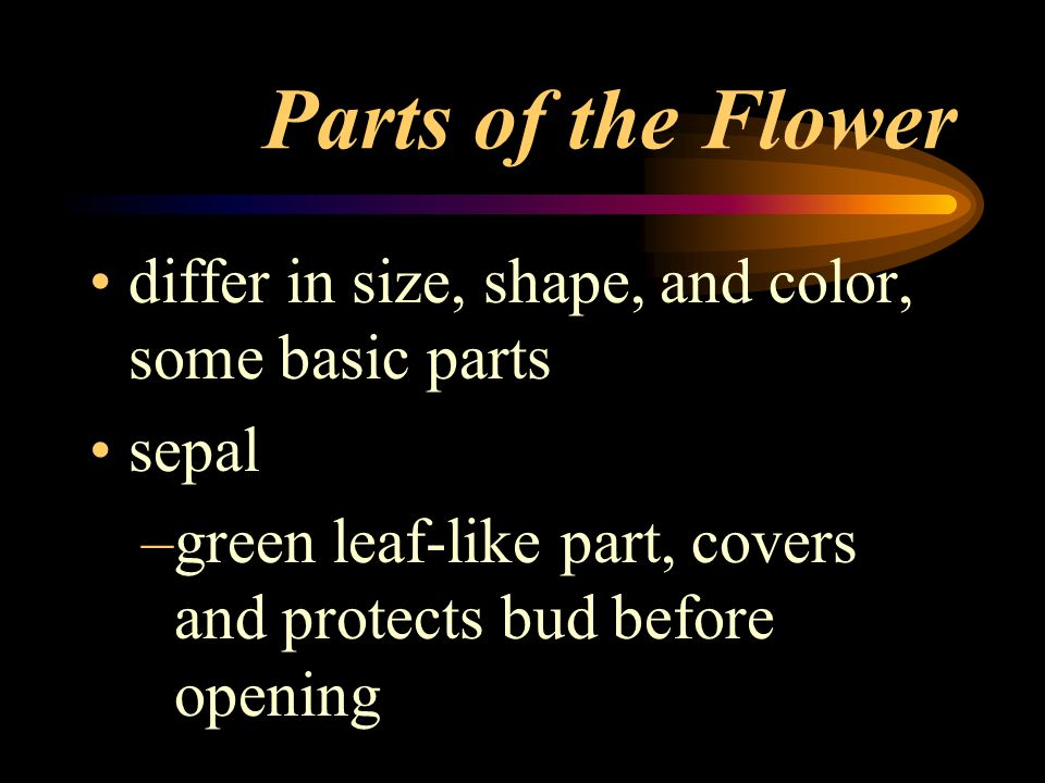 Parts of the Flower differ in size, shape, and color, some basic parts