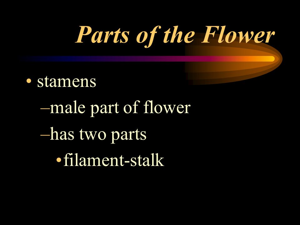 Parts of the Flower stamens male part of flower has two parts