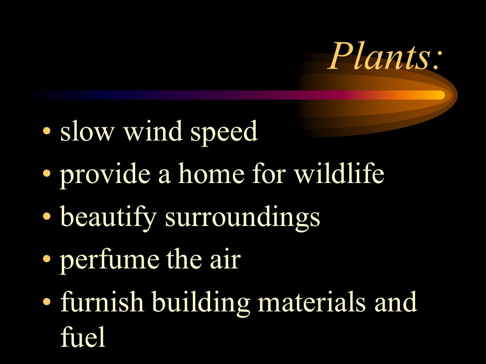 Plants: slow wind speed provide a home for wildlife