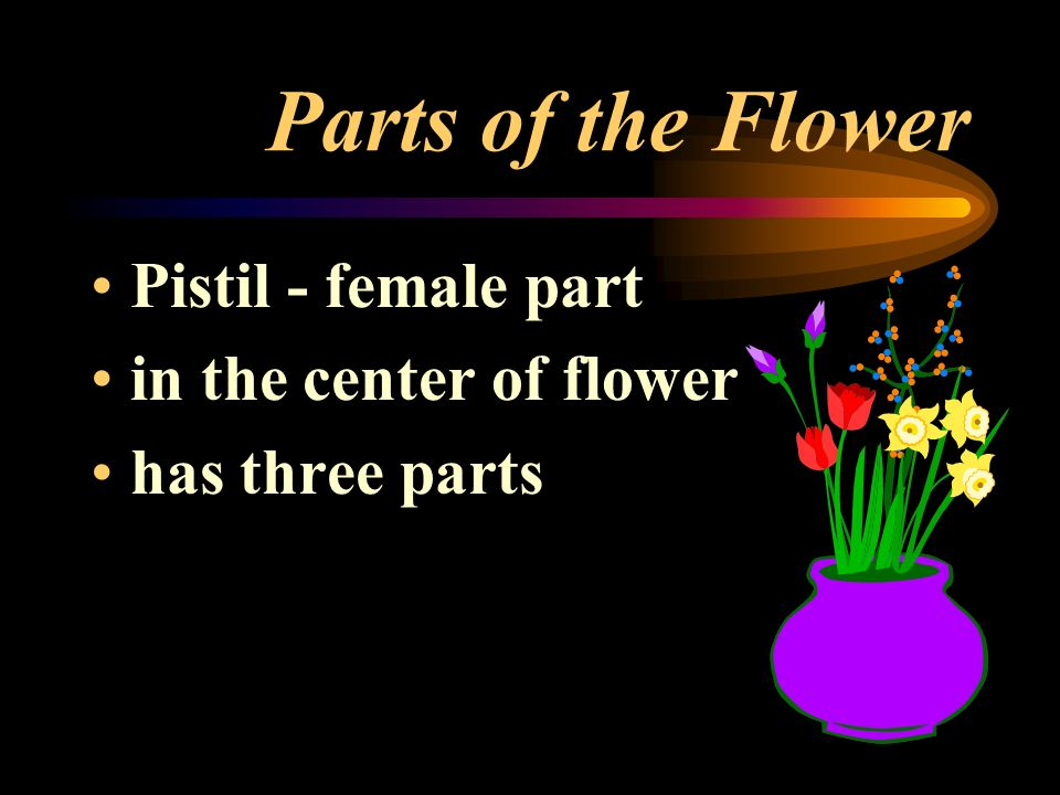 Parts of the Flower Pistil - female part in the center of flower