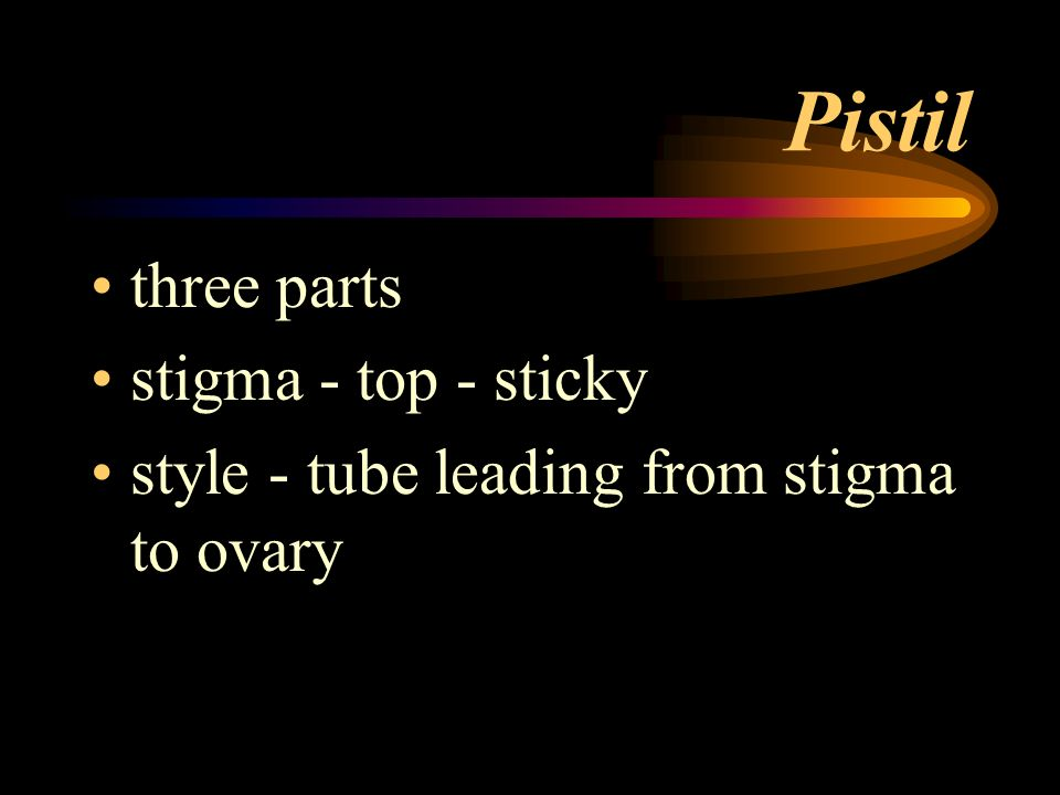 Pistil three parts stigma - top - sticky