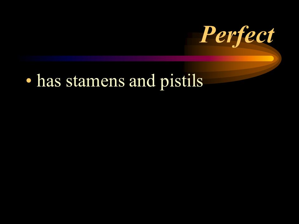 Perfect has stamens and pistils
