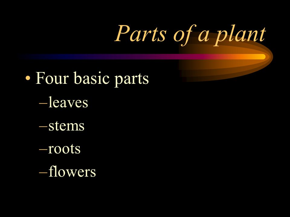 Parts of a plant Four basic parts leaves stems roots flowers