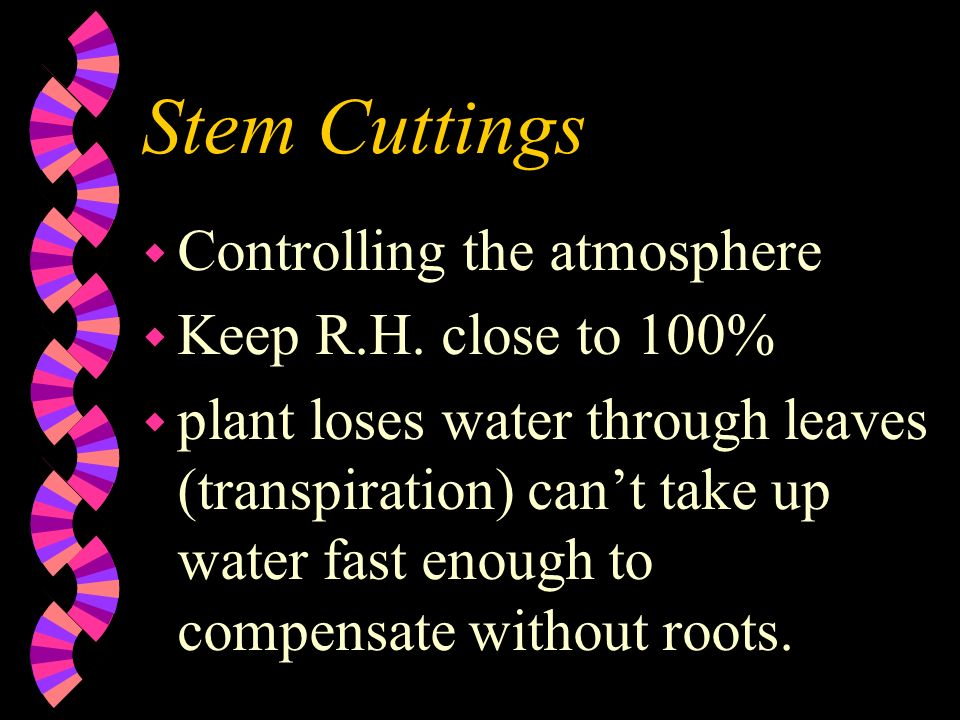 Stem Cuttings Controlling the atmosphere Keep R.H. close to 100%