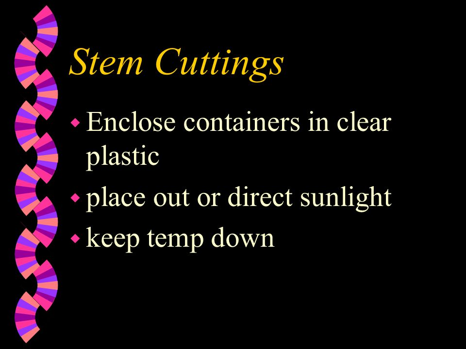 Stem Cuttings Enclose containers in clear plastic