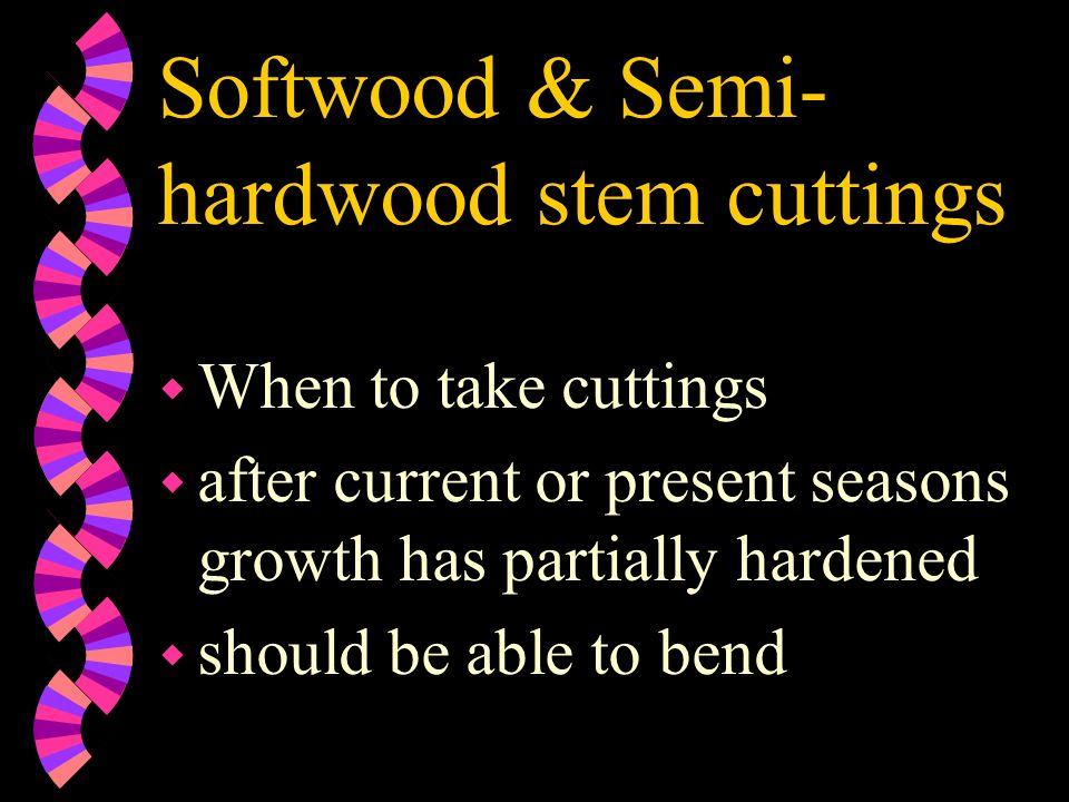 Softwood & Semi-hardwood stem cuttings