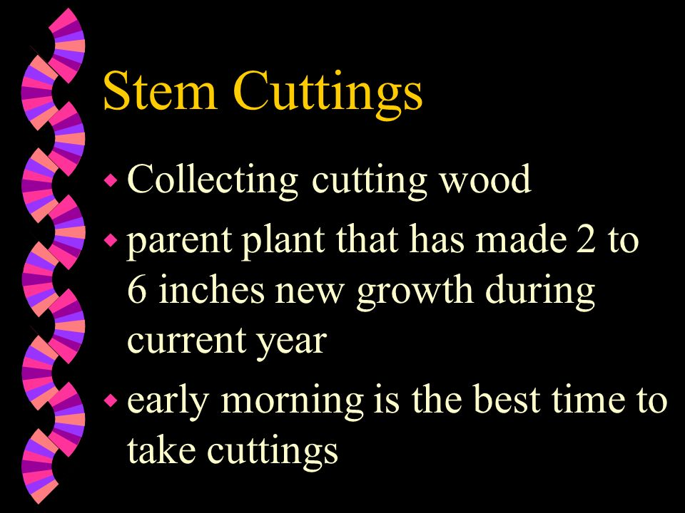 Stem Cuttings Collecting cutting wood