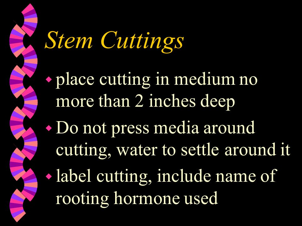 Stem Cuttings place cutting in medium no more than 2 inches deep