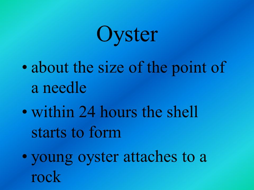 Oyster about the size of the point of a needle