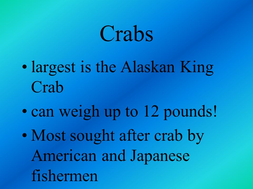 Crabs largest is the Alaskan King Crab can weigh up to 12 pounds!