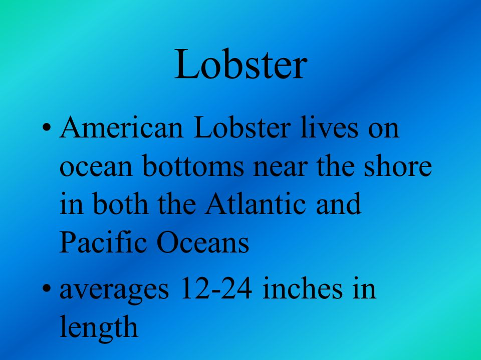 Lobster American Lobster lives on ocean bottoms near the shore in both the Atlantic and Pacific Oceans.