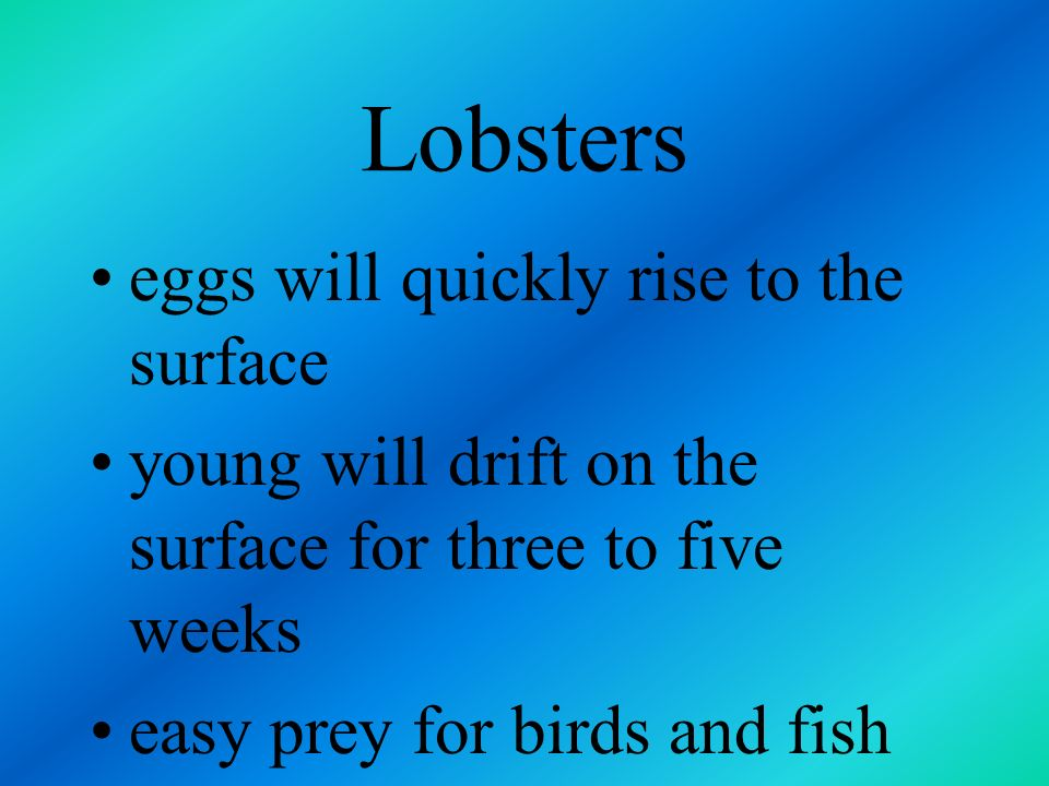 Lobsters eggs will quickly rise to the surface