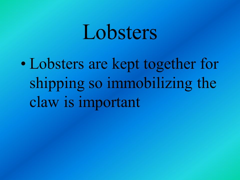 Lobsters Lobsters are kept together for shipping so immobilizing the claw is important