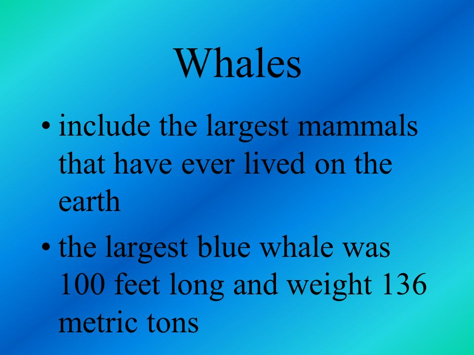 Whales include the largest mammals that have ever lived on the earth