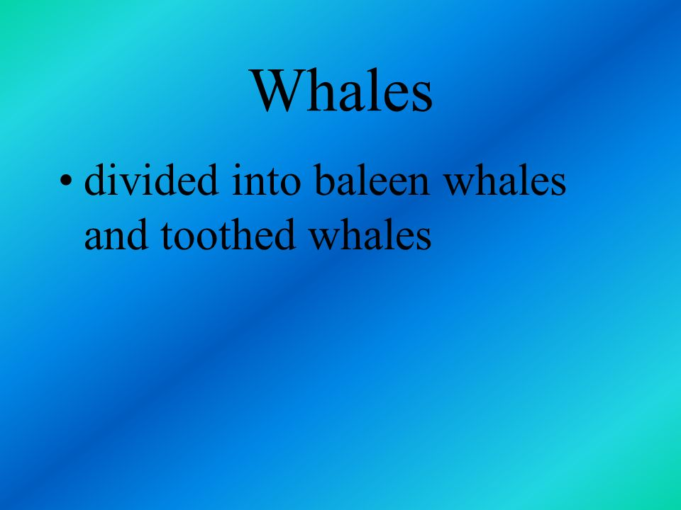 Whales divided into baleen whales and toothed whales
