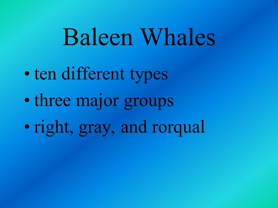 Baleen Whales ten different types three major groups