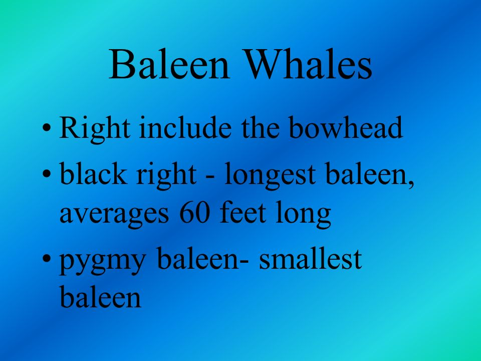 Baleen Whales Right include the bowhead