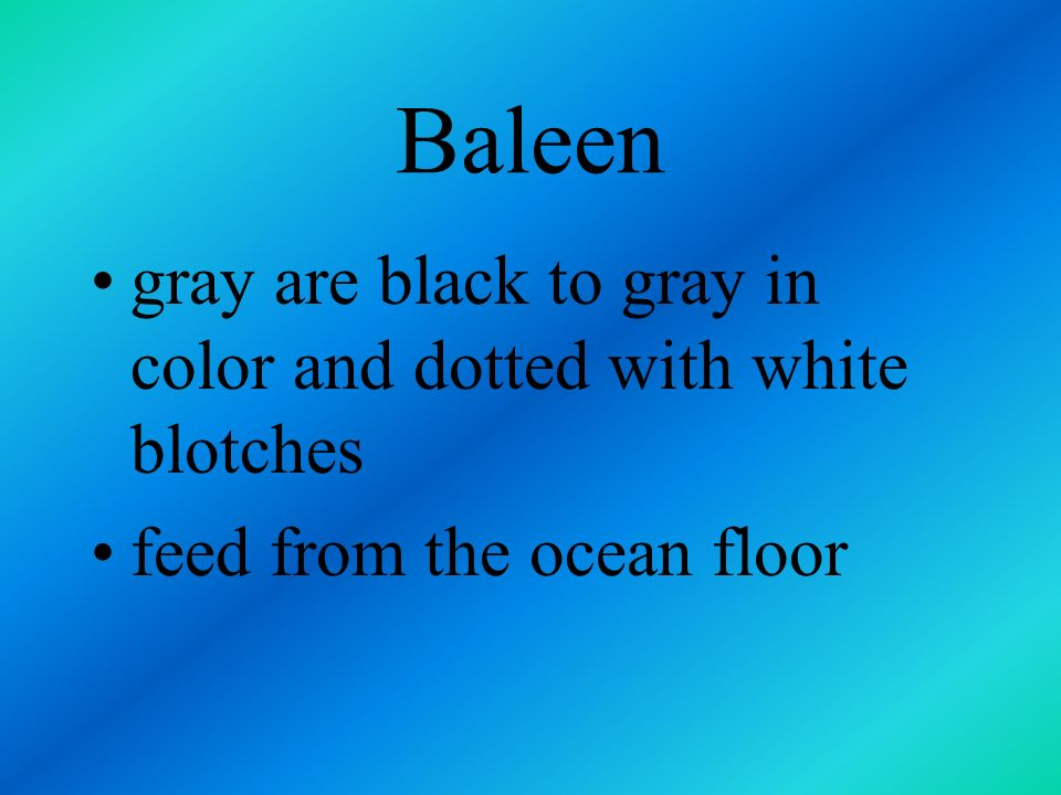 Baleen gray are black to gray in color and dotted with white blotches
