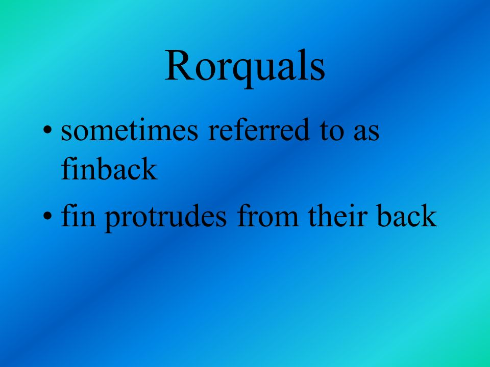 Rorquals sometimes referred to as finback