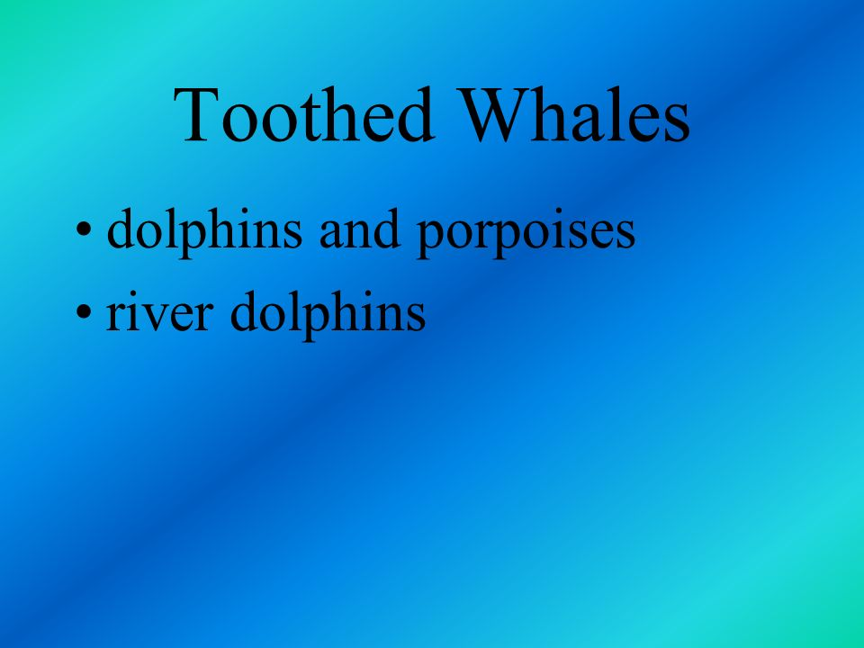 Toothed Whales dolphins and porpoises river dolphins